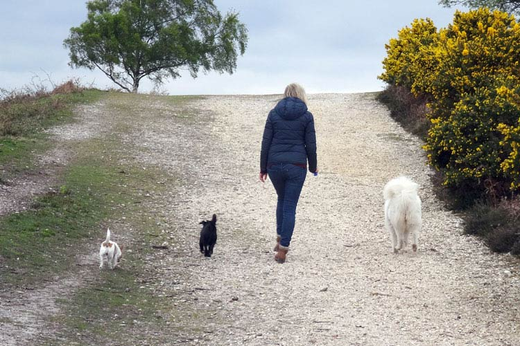 Group walk with Julia | Waggypal Group Walks